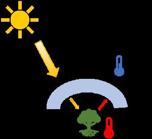 Cómo funciona un invernadero